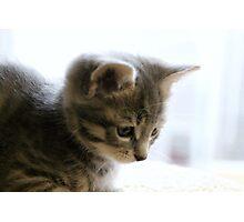 Tiny Baby Grey Photographic Print