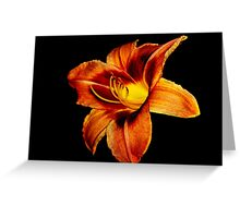 Orange, Red and Yellow Daylily Greeting Card
