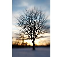 winter tree Photographic Print