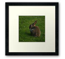 Wild Rabbit Pondering Framed Print
