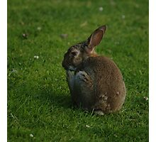 Wild Rabbit Pondering Photographic Print