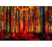 Forest Bright Photographic Print