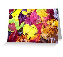 Colorful Autumn Leaf Arrangement Greeting Card