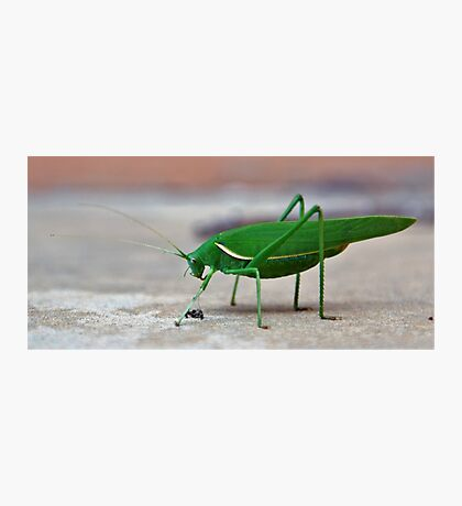 The Grass(hopper) is Greener Photographic Print