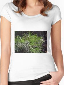 Pine Needles Women's Fitted Scoop T-Shirt