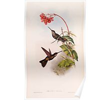 A monograph of the Trochilidæ or family of humming birds by John Gould 1861 V4 218 Poster