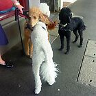 *Three Poodles along Nelson Place - Williamstown, Vic. by EdsMum