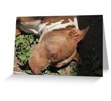 Pit Bull Dog in a Garden Greeting Card