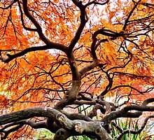 Vancouver botanical garden Chinese tree by daxfullbrook