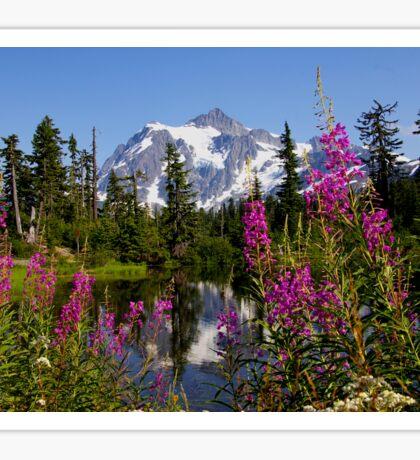 fireweed, picture lake, and mt shuksan, washington usa Sticker