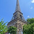 Eiffel Tower through the trees 2 by DES PALMER