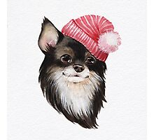 Chihuahua wearing a hat Photographic Print
