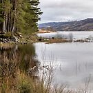 Loch Arklet Shore by Jeremy Lavender Photography