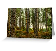 Bedgebury National Park Greeting Card