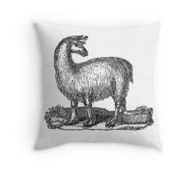 Vintage Llama Illustration Retro 1800s Black White Llamas Drawing Throw Pillow