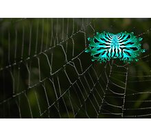 Abstract Spider on Web Photographic Print