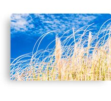 Golden blue fields of reeds under malta blue sky Canvas Print