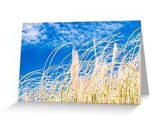 Golden blue fields of reeds under malta blue sky Greeting Card