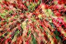 fireworks 26/1/16 by david gilliver