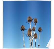 clear sky and thistles Poster