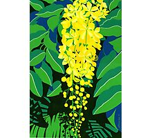Golden Shower Tree Photographic Print