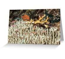 Table Coral with Fish Greeting Card