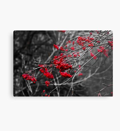 Winter Berries Metal Print