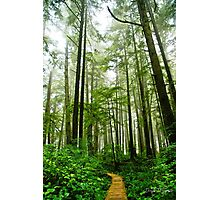 Olympic National Park II Photographic Print