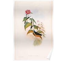 A monograph of the Trochilidæ or family of humming birds by John Gould 1861 V5 020 Poster