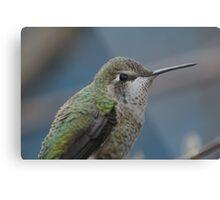 Humming Bird Metal Print
