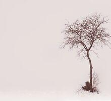 Little Tree by Angelika  Vogel