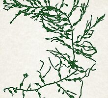 Green Seaweed Art by Christina Rollo