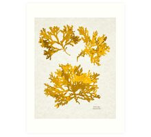 Yellow Gold Seaweed Art Art Print