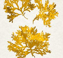 Yellow Gold Seaweed Art by Christina Rollo