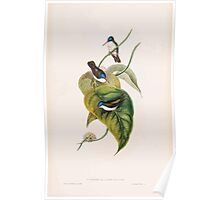 A monograph of the Trochilidæ or family of humming birds by John Gould 1861 V5 012 Poster