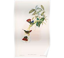 A monograph of the Trochilidæ or family of humming birds by John Gould 1861 V5 176 Poster