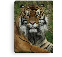 The True King of the Jungle Canvas Print