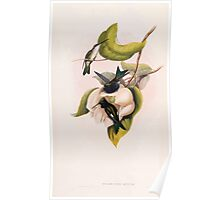 A monograph of the Trochilidæ or family of humming birds by John Gould 1861 V4 250 Poster