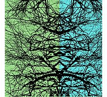 Abstract tree branches over blue and green background Photographic Print