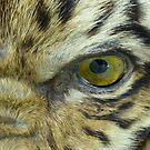 Eye of the Tiger by John Douglas