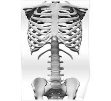Anatomy white bones skeleton Poster