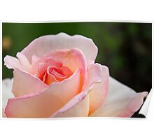 Elegant Soft Pink Rose Poster