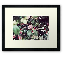 Pink Roses (Madrid) Framed Print