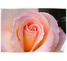 Elegant Soft Pink Rose 2 Poster