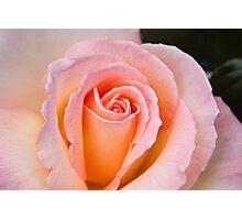 Elegant Soft Pink Rose 2 Photographic Print