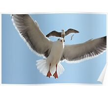 Seagulls Soaring in the Sky Poster