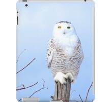 My scratching post iPad Case/Skin