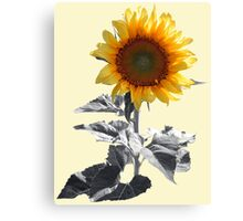 SUNFLOWER ON GREY Canvas Print