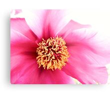 Spring Altered Pink Peony Metal Print