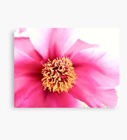 Spring Altered Pink Peony Canvas Print